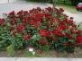 IX Warsztaty - Koncert z różą w tle